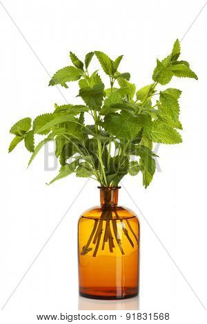 Lemon Balm branches in apothecary bottle isolated on white background