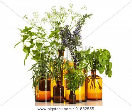 various herbs - white nettle, yarrow, lavender, woodruff, lemon balm, rosemary in pharmacy bottles isolated on white background