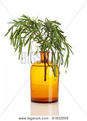 Lavendula angustifolia or Common Lavender branch in apothecary bottle isolated on white background