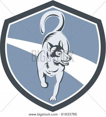 Husky Dog Crest Retro