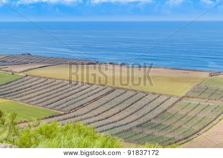 Fields on shore of Atlantic coast of Morocco, near Safi