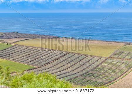 Fields on shore of Atlantic coast of Morocco, near Safi