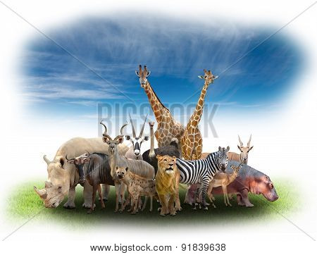Group Of Africa Animals