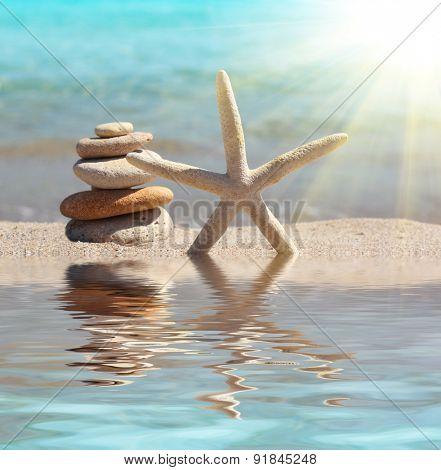 starfish and stones on sand