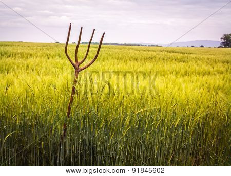 Rustic wooden pitch fork in field full of wheat