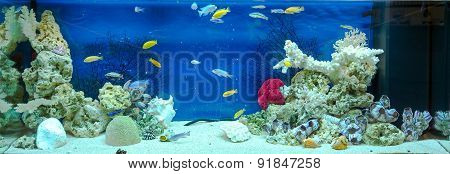 Large Rectangular Aquarium With Tropical Cichlids Fish
