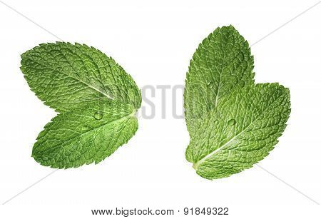 Two Double Mint Leaves Composition Isolated On White