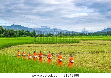 monks walk in the field to beg give food offerings