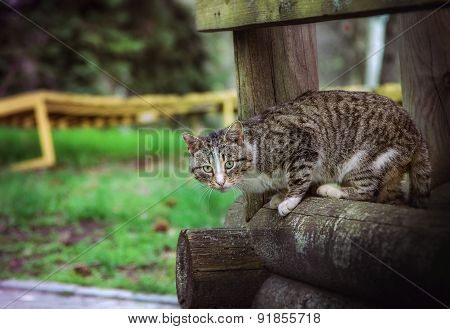 Cat on the wooden beam