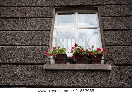 Flower pots at window sill