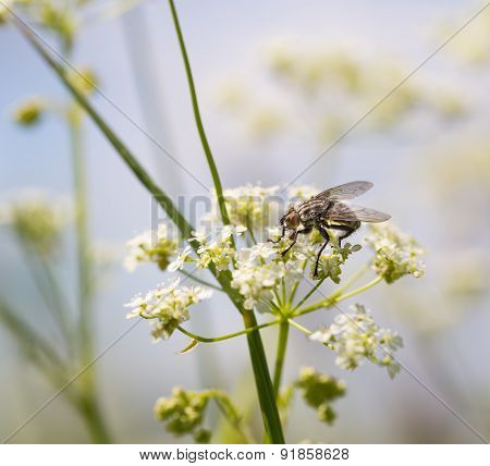 Macro Of Fly Sitting On Plant