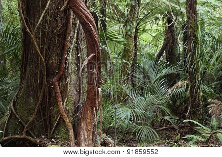 Vines on tree in tropical jungle