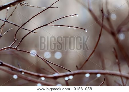 Drops On Branches