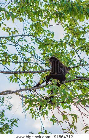 Langur sitting on tree branch