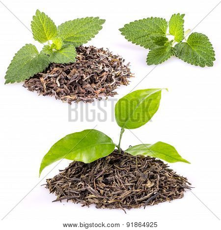 Tea And  Lemon Balm