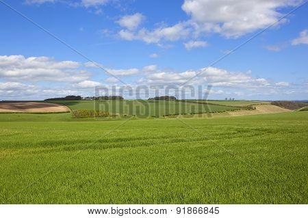 Scenic Undulating Springtime Landscape