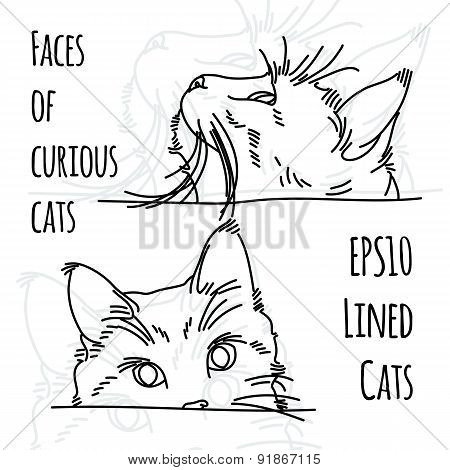 Vector illustration of two curious cat muzzles