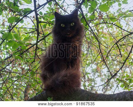 Black Cat Sitting On A Tree. Pets