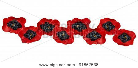 Decor Of Red Poppies Isolated On A White Background