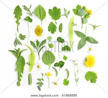 Various medicinal plants, isolated on white