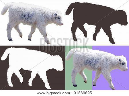 little yak