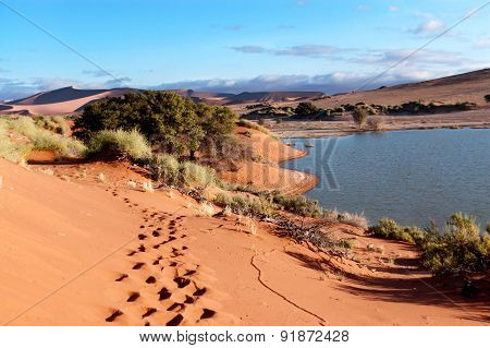 Beautiful sunset dunes, lake and nature of Namib desert, Sossusvlei, Namibia, South Africa