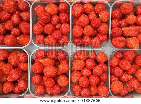 Fine grown strawberries