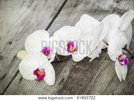 Vintage photo of white orchid on wooden background