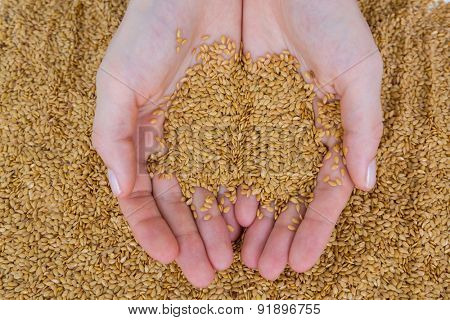 Hands holding seeds on white background