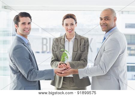 Business colleagues holding plant together in the office