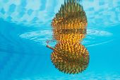foto of tropical food  - Underwater photography with water surface reflection of tropical spiny fruit durian with an unpleasant smell - JPG