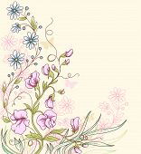picture of sweet pea  - Floral summer vector background with sweet pea - JPG