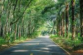 image of row trees  - Road Between Row of expired para rubber tree and palm tree - JPG