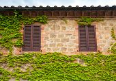 pic of ivy vine  - View of a wall with two windows and ivy in Tuscany - JPG