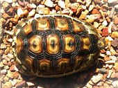 picture of tortoise  - A close - JPG