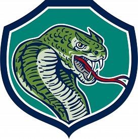 picture of serpent  - Illustration of a cobra viper snake serpent showing fangs and forked tongue viewed from side set inside shield crest done in retro style - JPG