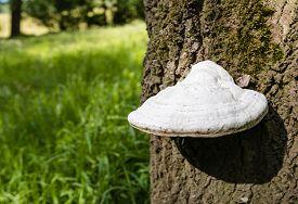 stock photo of bracket-fungus  - Close - JPG
