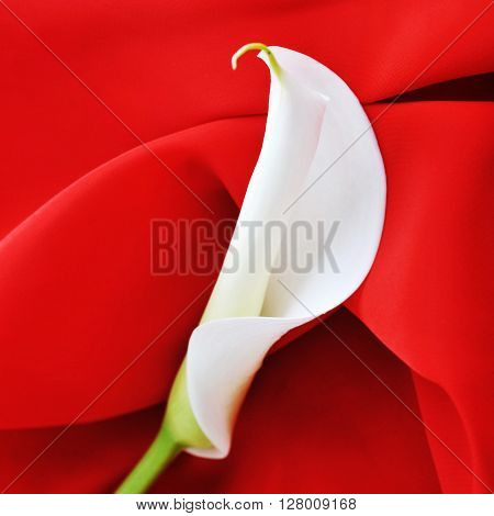 red graceful fabric and white calla lily close up