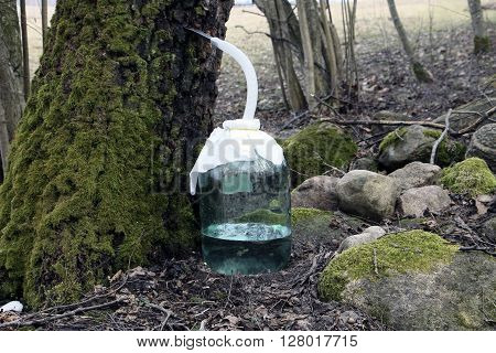 Big jar of birch sap near mossgrown stones and trees in forest wood