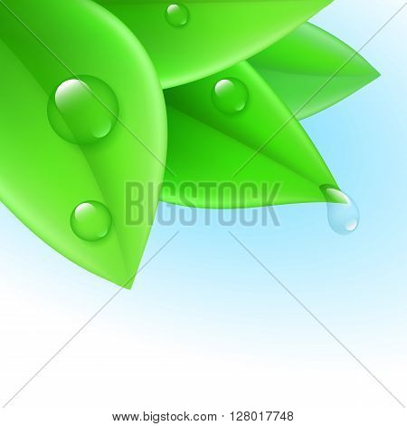 Pure transparent water drops on green leaves
