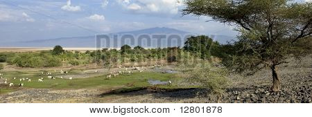 Landscape with African wildlife, Tanzania
