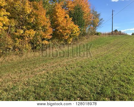 green field of grass flanked by trees of golden leaves and blue sky