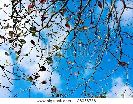 Tree branches entwined in patterns on a background of blue sky