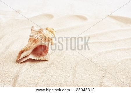 White sand with big seashell, high key