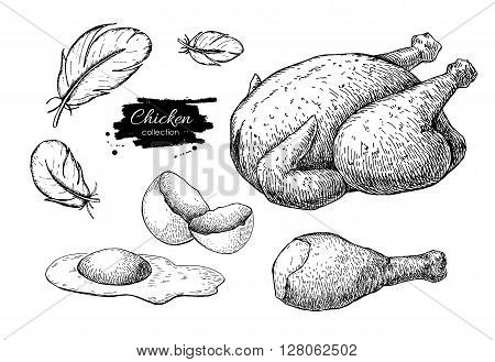 Vector Chicken farming products drawings. Engraved baked whole chicken and leg eggs and feather. Poultry natural business.