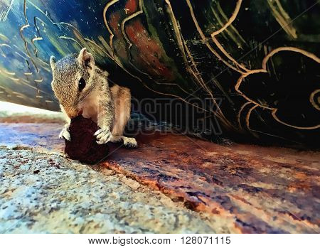 Squirrel eating a cookie, striped squirrel or palm chipmunk in a shelter in old tower fed by tourist