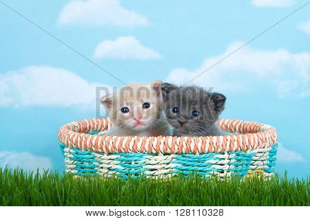 Two One Month Old Kittens In A Spring Basket In Tall Green Grass