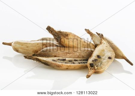 Exotic tropical fruit called piñuela (Bromelia pinguin)