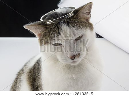 Closeup of cat with crown on his head in studio with white and black backdrops and softbox