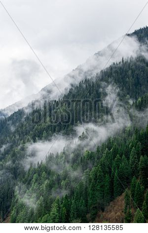 A foggy, mountainside morning in Kashmir, India